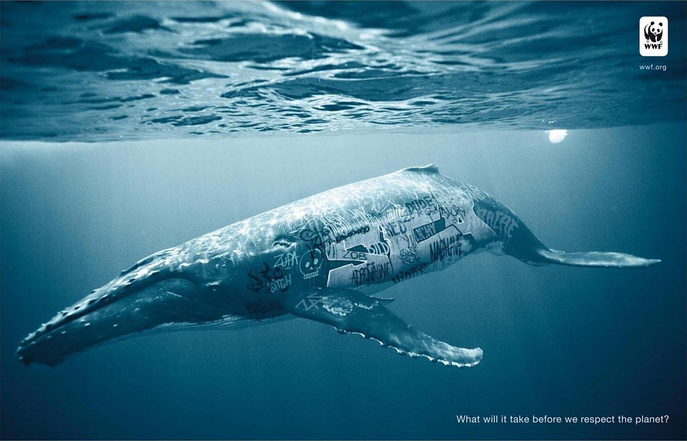 WWF Print Ad -  Biodiversity And Biosafety Awareness, Whale
