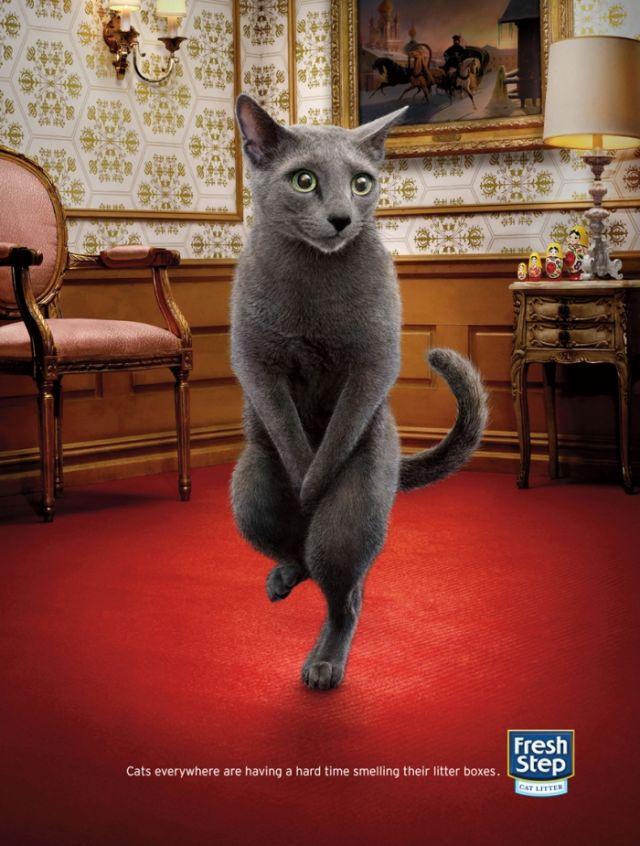 Fresh Step Print Ad -  Cross-legged cats, 1