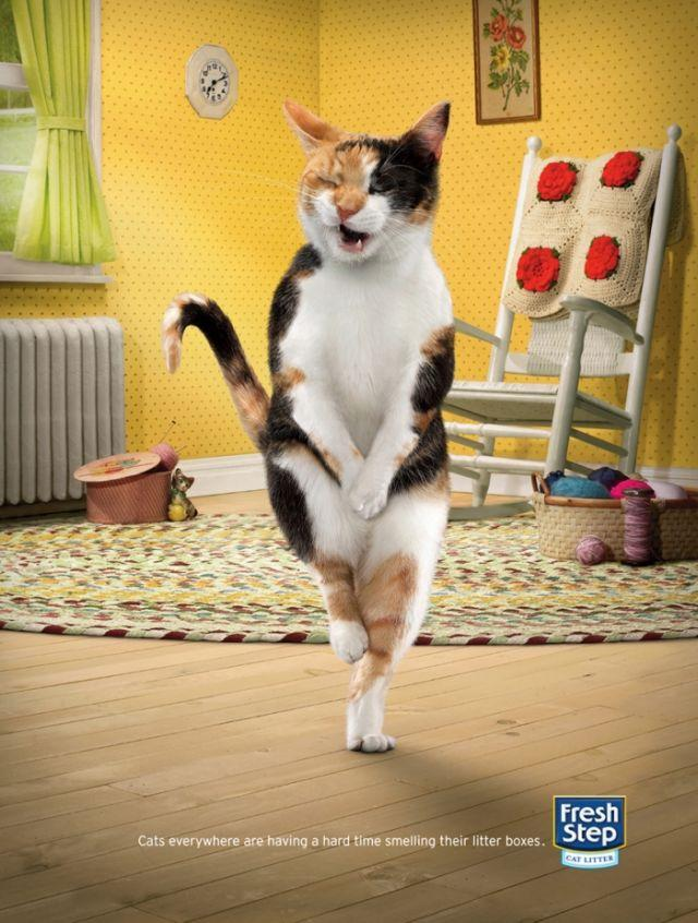 Fresh Step Print Ad -  Cross-legged cats, 3