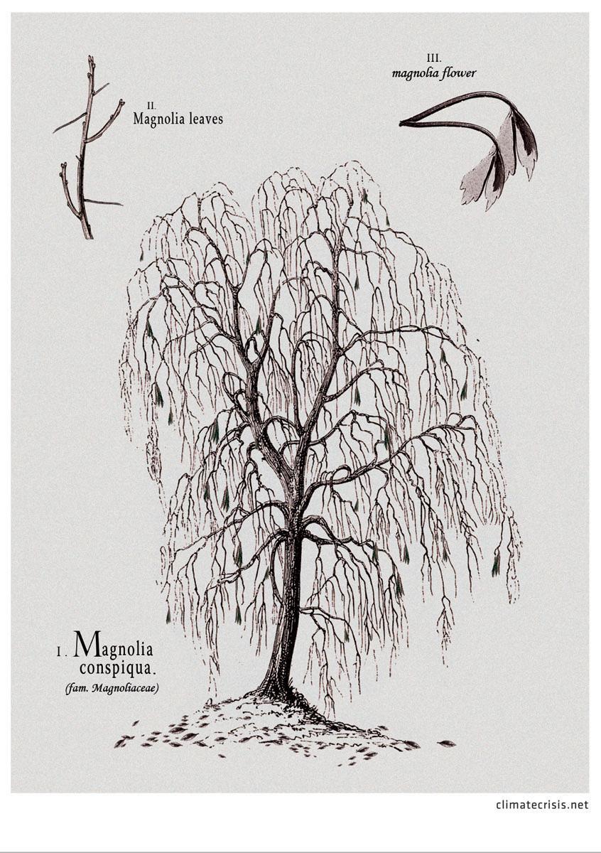 climatecrisis.net Print Ad -  Magnolia