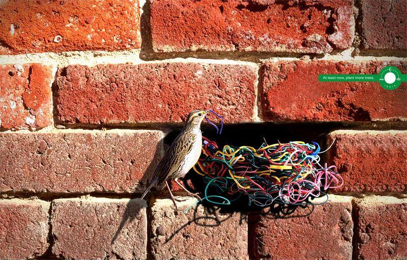 Nesting bird