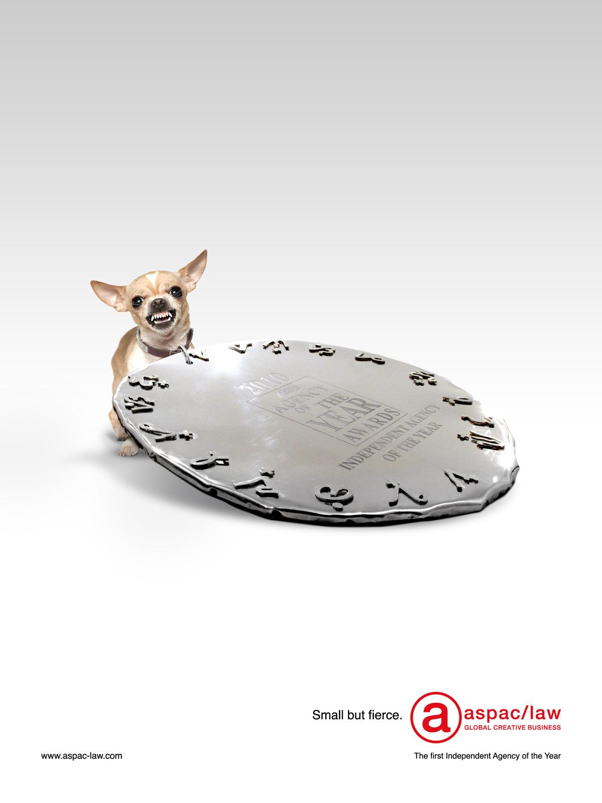 Aspac-Law Print Ad -  Fierce Chihuahua