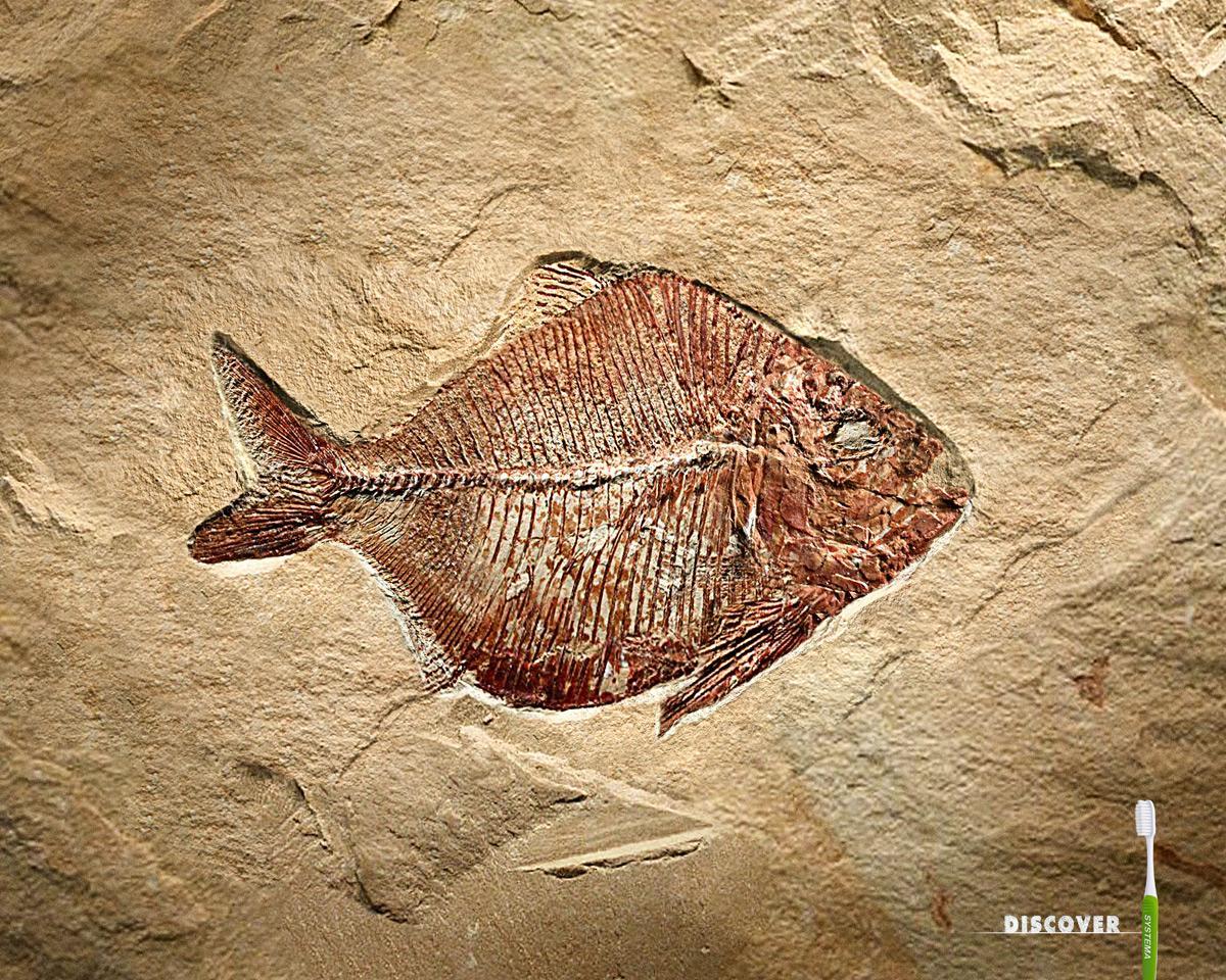 Systema Print Ad -  Fish Fossil