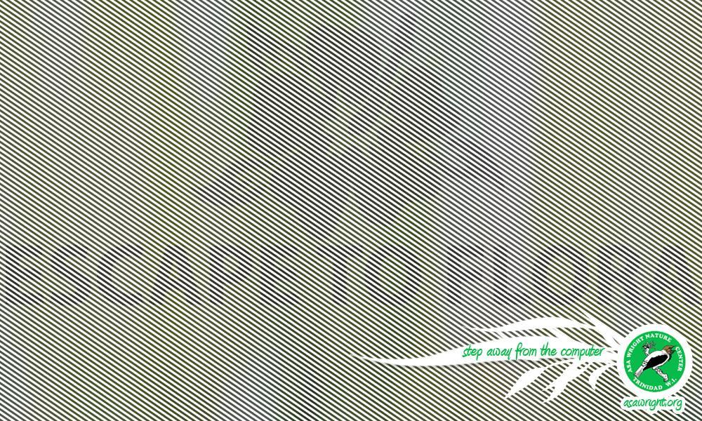 Asa Wright Digital Ad -  Flora