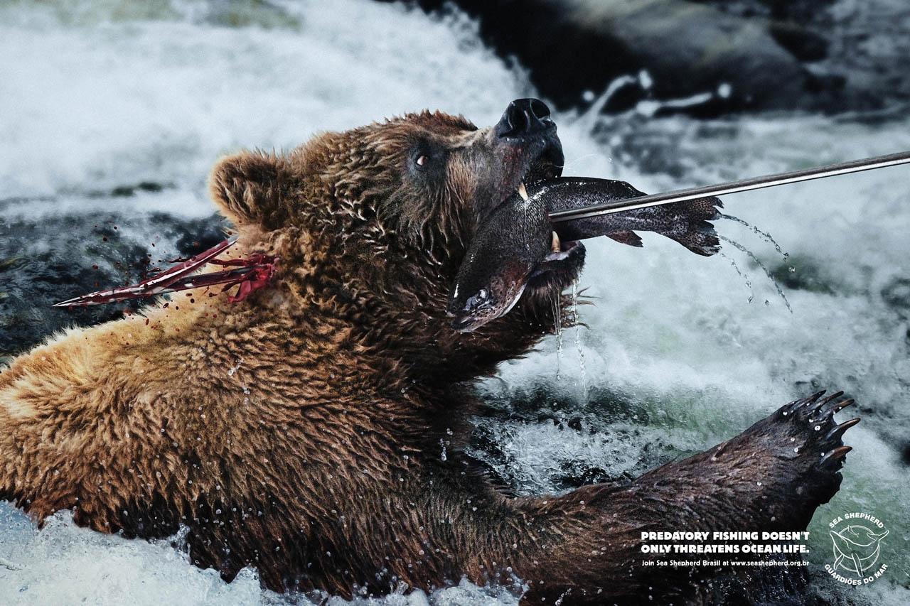 Sea Shepherd Print Ad -  Harpoon, Bear