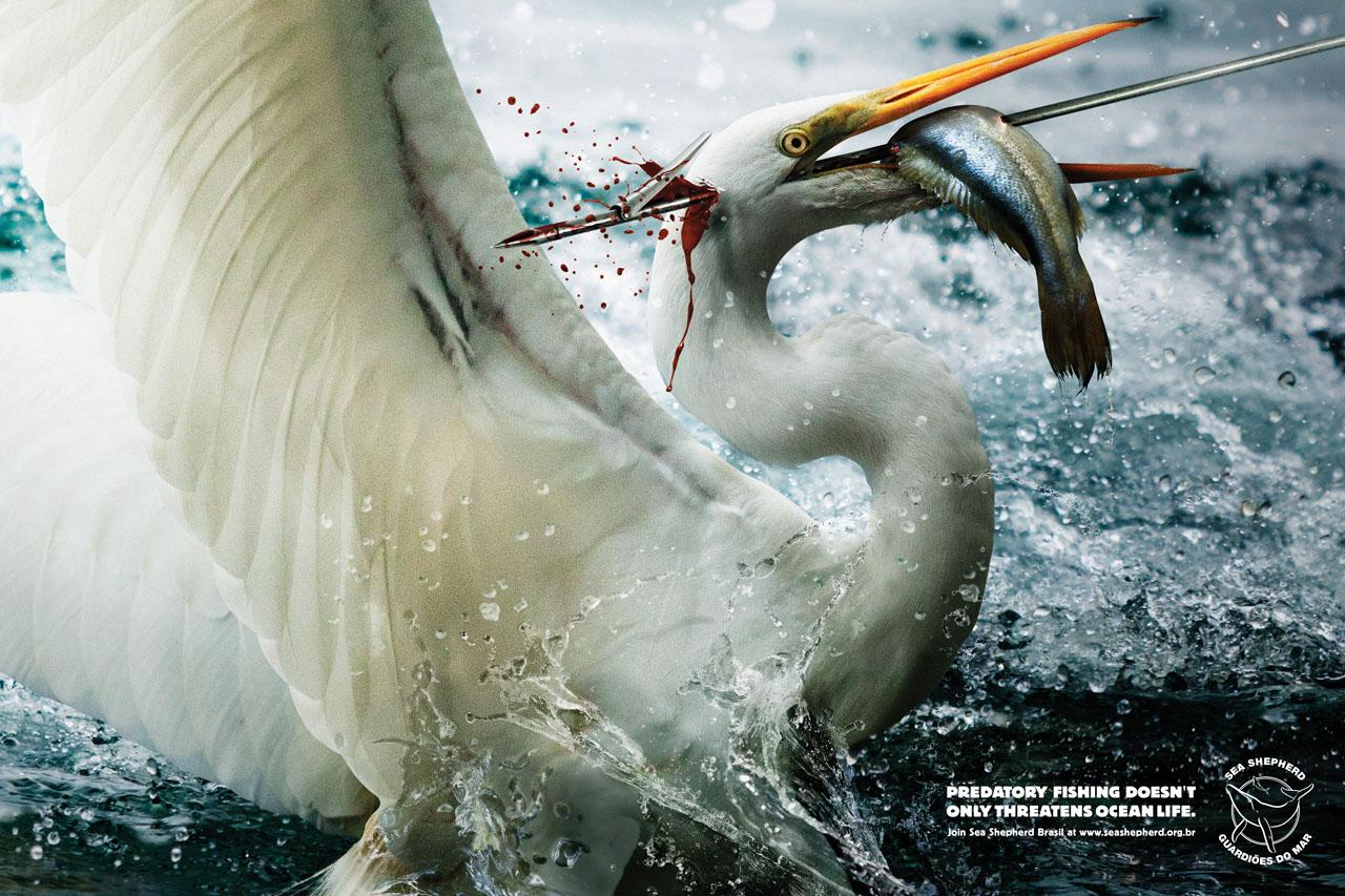 Sea Shepherd Print Ad -  Harpoon, Egret