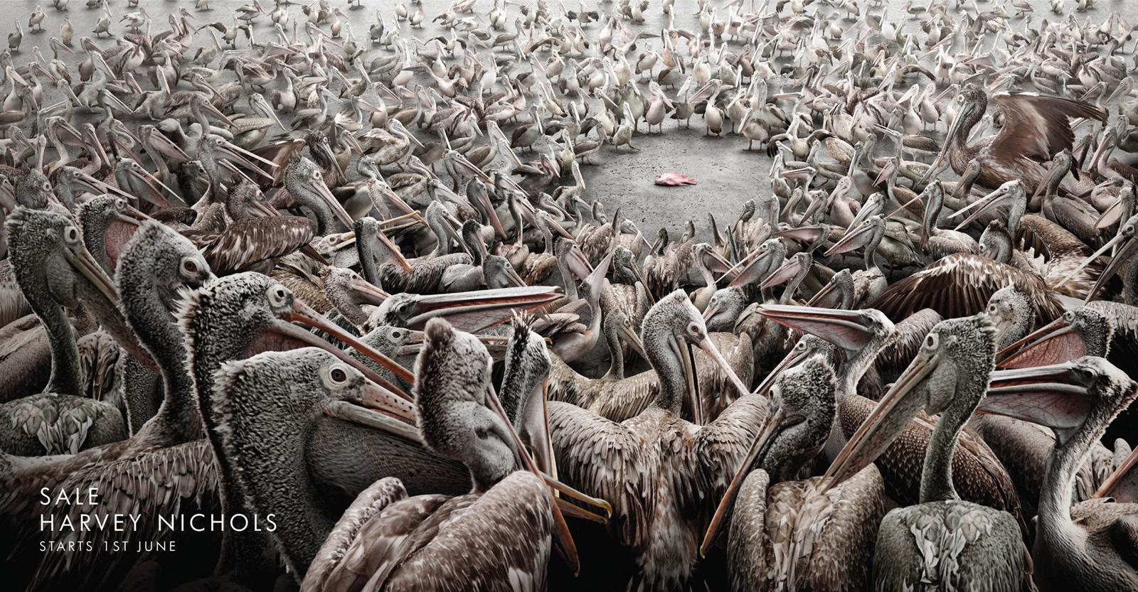Harvey Nichols Print Ad -  Pelicans