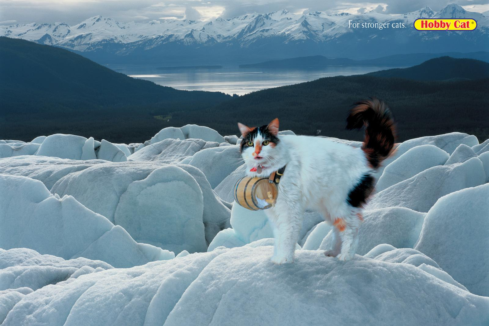 Hobby Cat Print Ad -  St Bernard