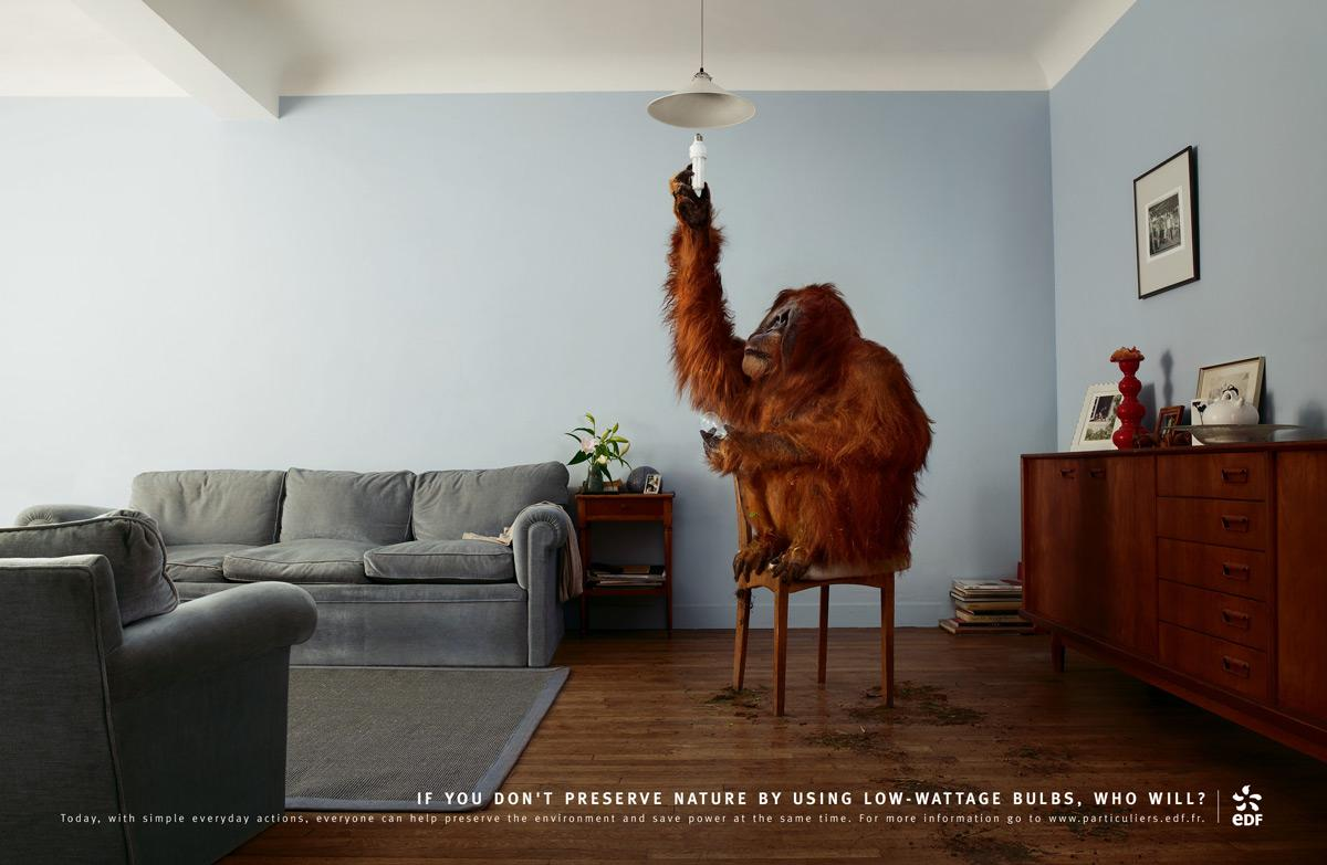 Save energy, Orangutan