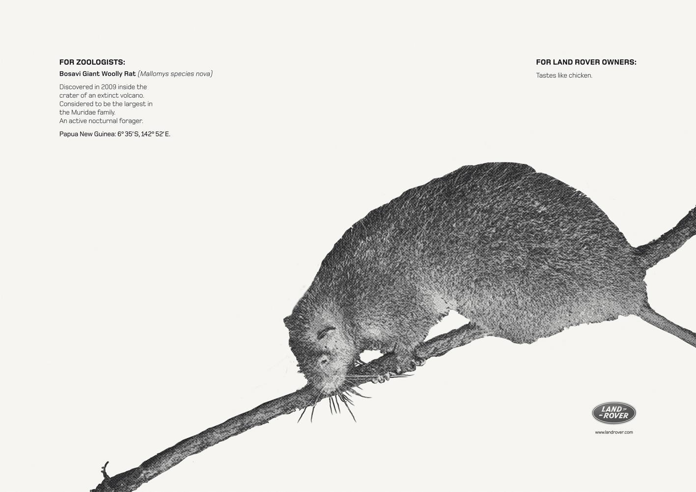 Land Rover Print Ad -  Bosavi Giant Wolly Rat