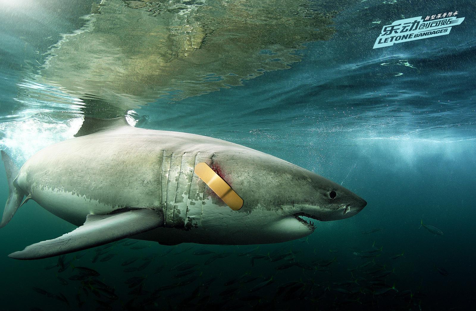 LeTone Print Ad -  Shark