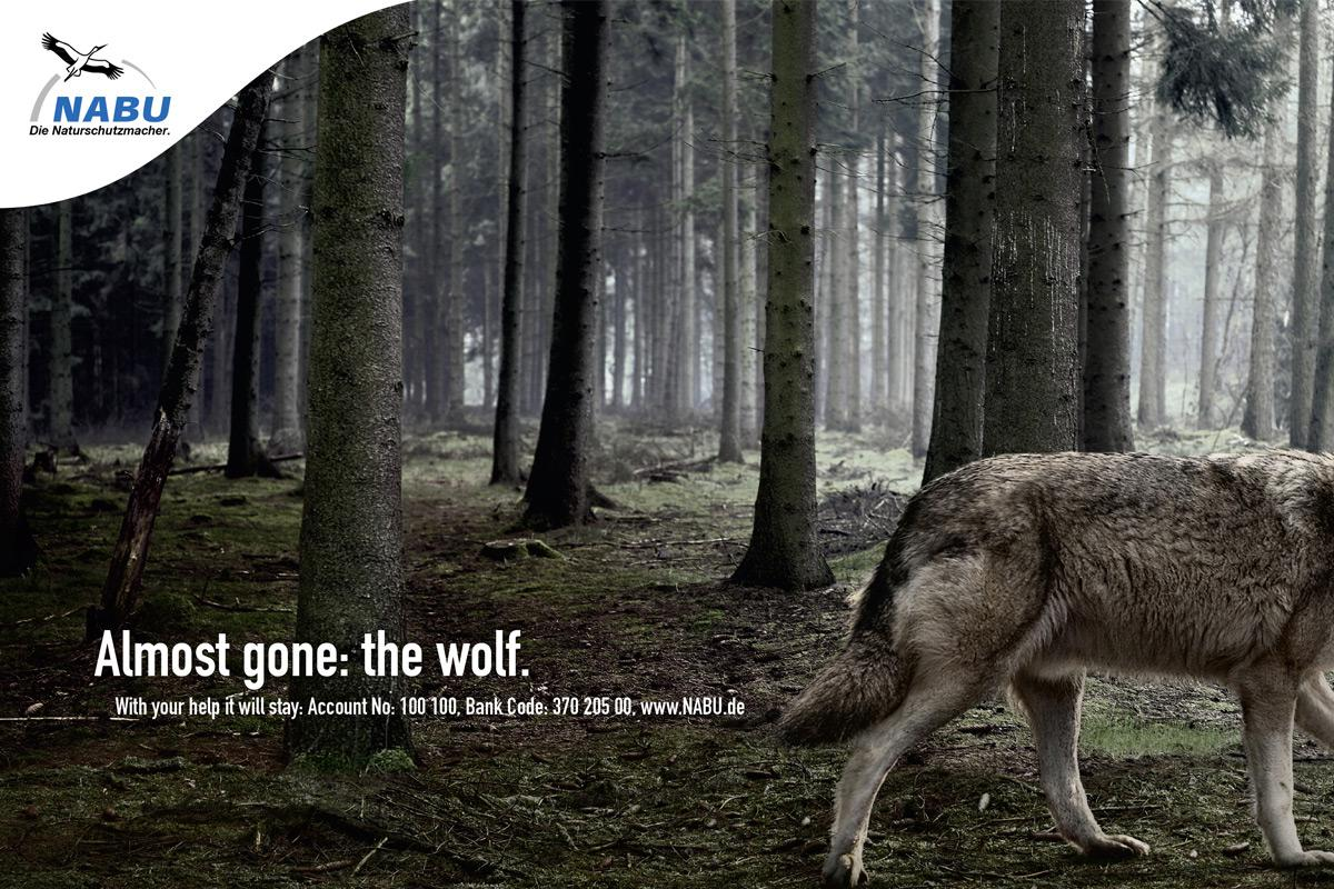 NABU Print Ad -  Wolf