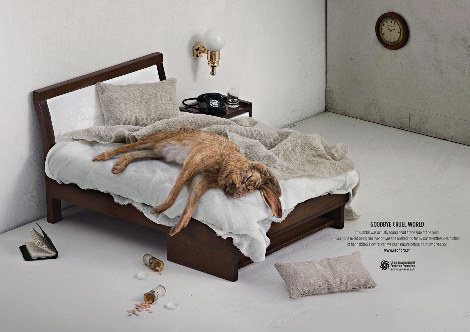 China Environmental Protection Foundation Print Ad -  Rabbit
