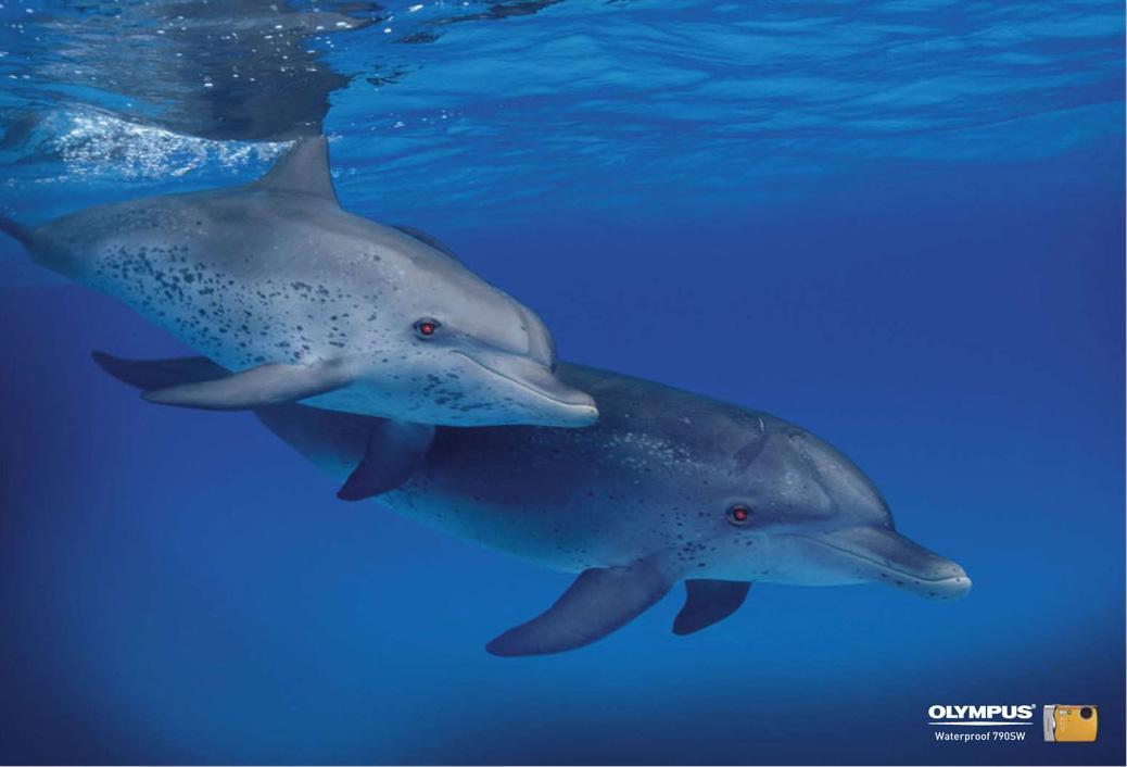 Olympus Print Ad -  Dolphins