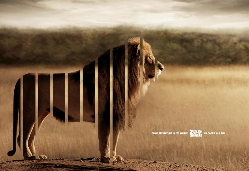 Zoo Safari Print Ad -  Lion
