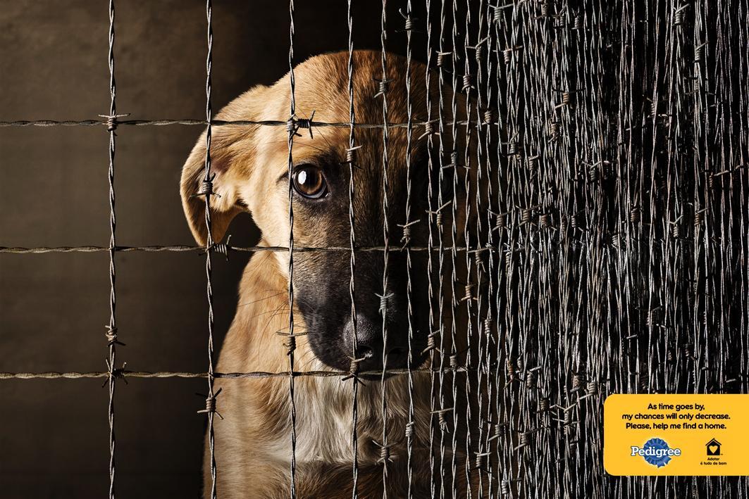 Pedigree Print Ad -  Dog Cage, 2