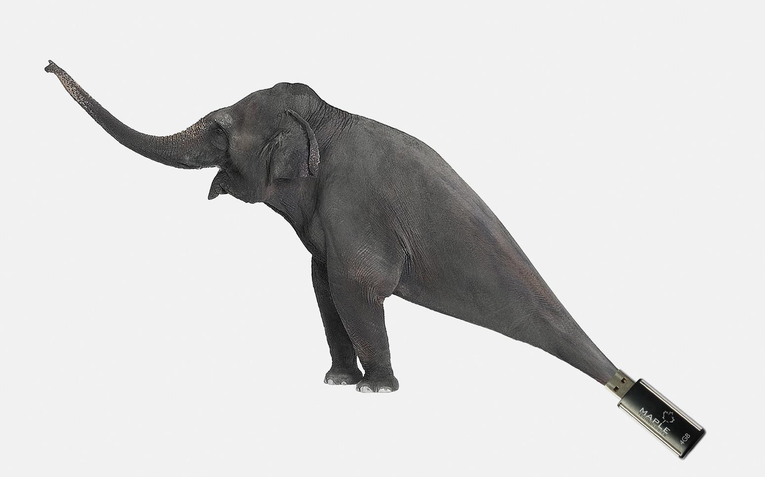 Maple Technologies Print Ad -  Elephant