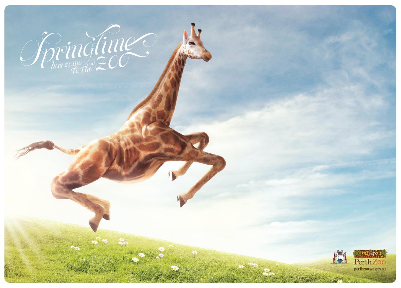 Perth Zoo Print Ad -  Giraffe