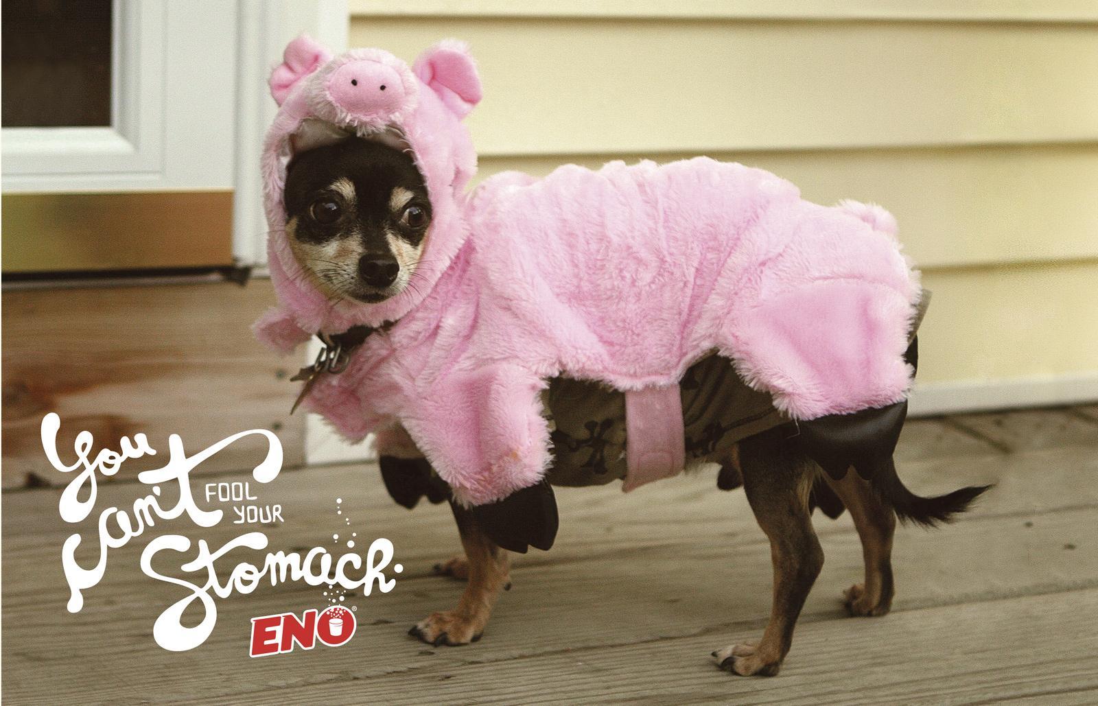 Eno Print Ad -  Pig