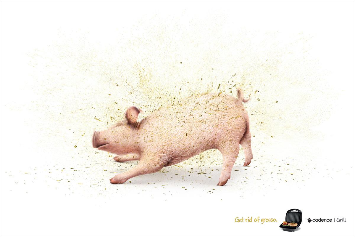 Cadence Print Ad -  Pig
