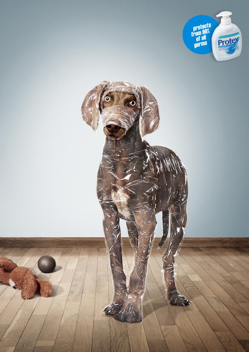 Protex Print Ad -  Wrapped Dog