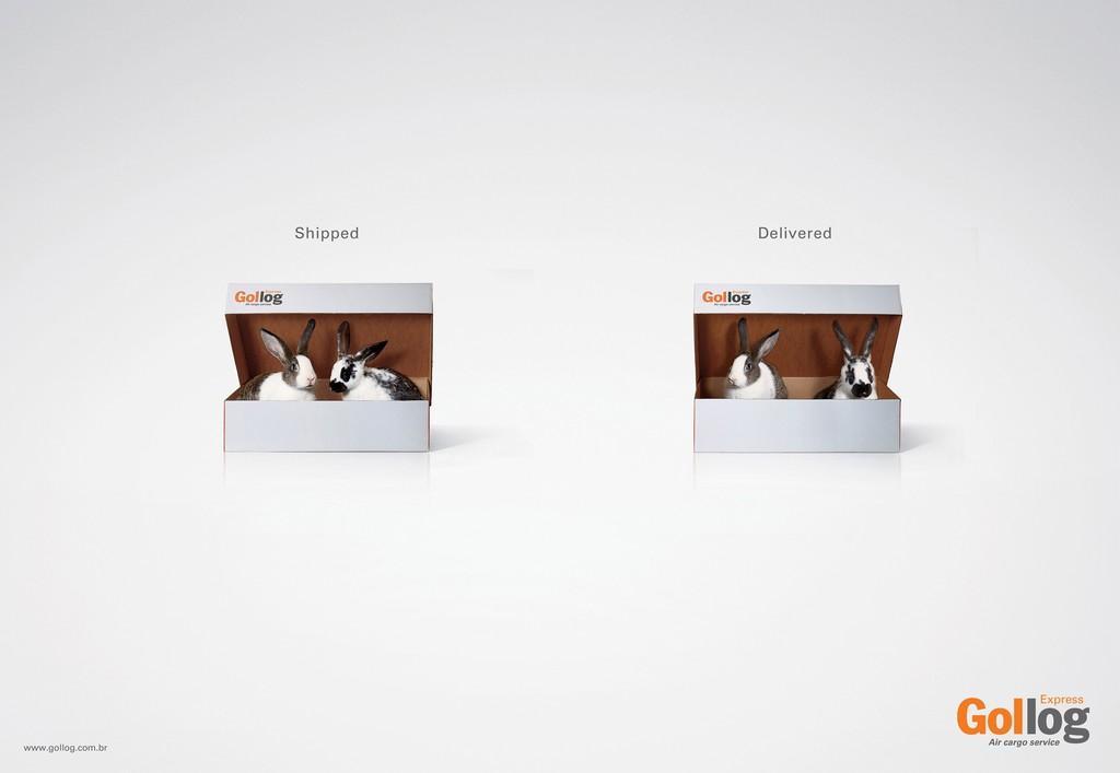 Gollog Print Ad -  Rabbit