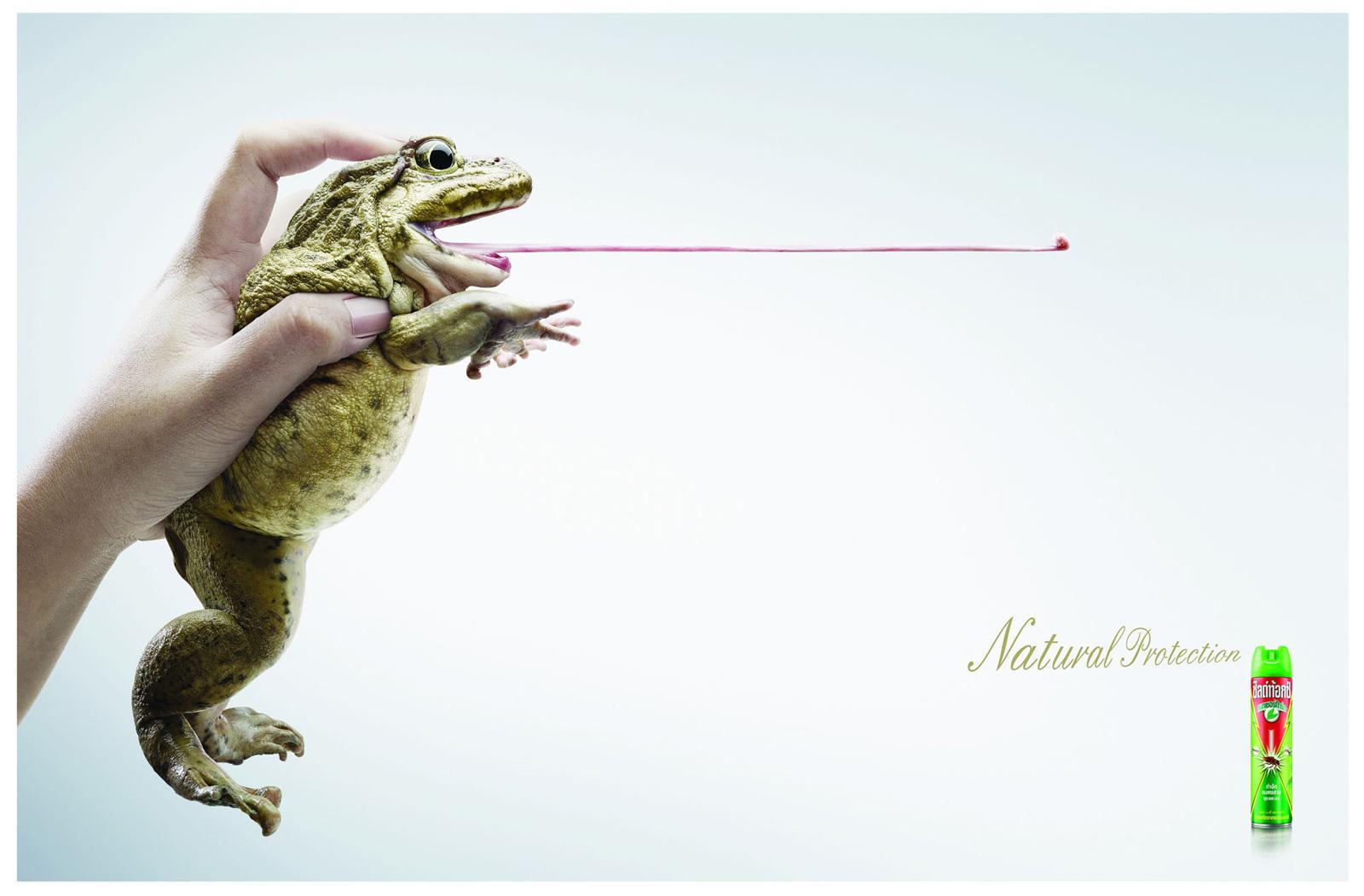 Shieldtox Print Ad -  Frog