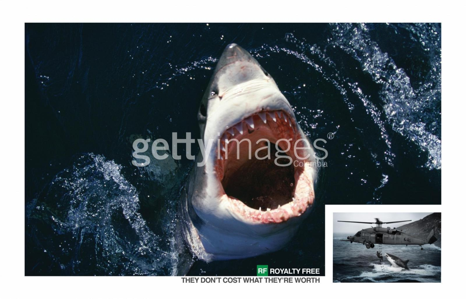 Getty Images Print Ad -  Shark