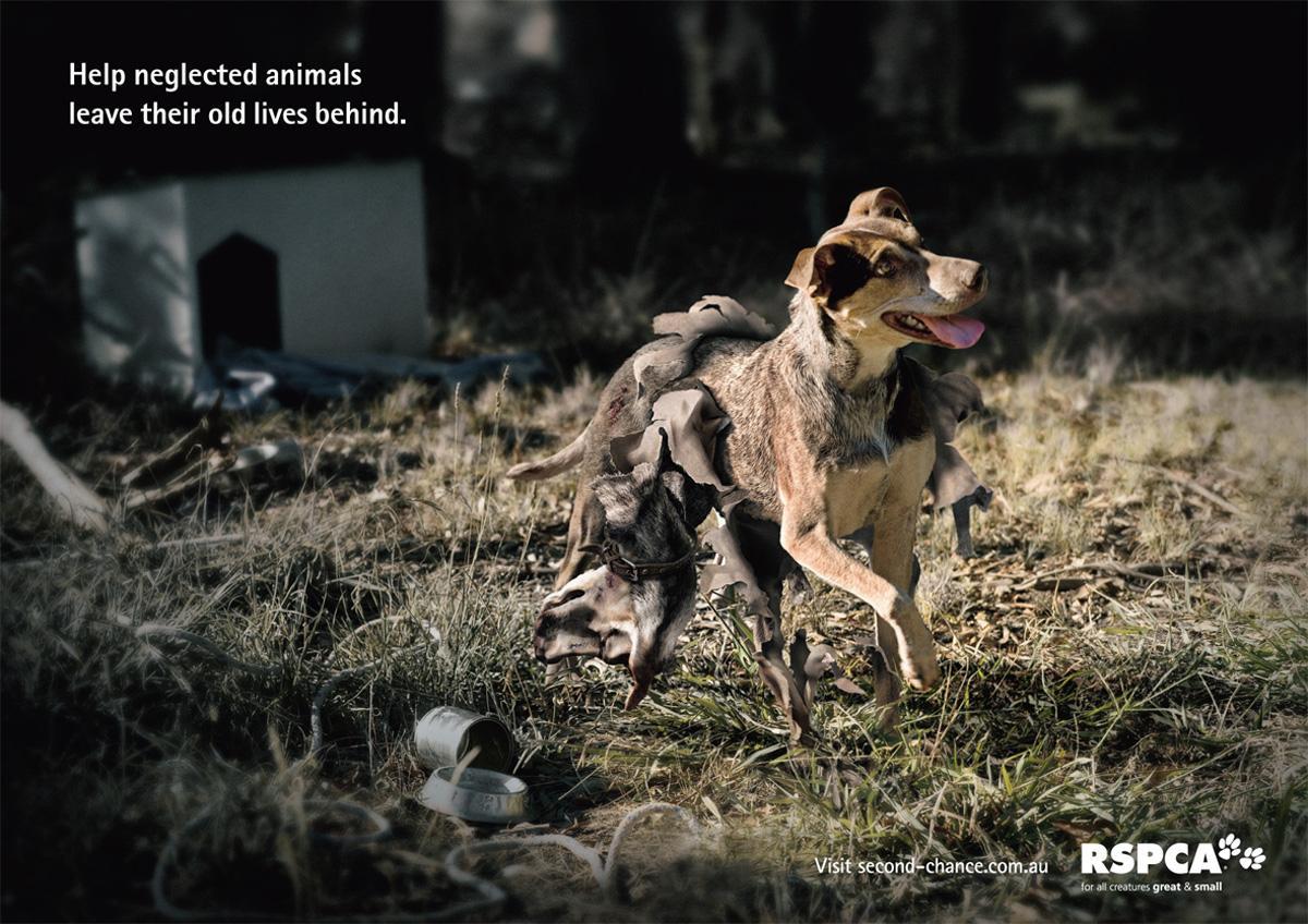 RSPCA Print Ad -  Dog