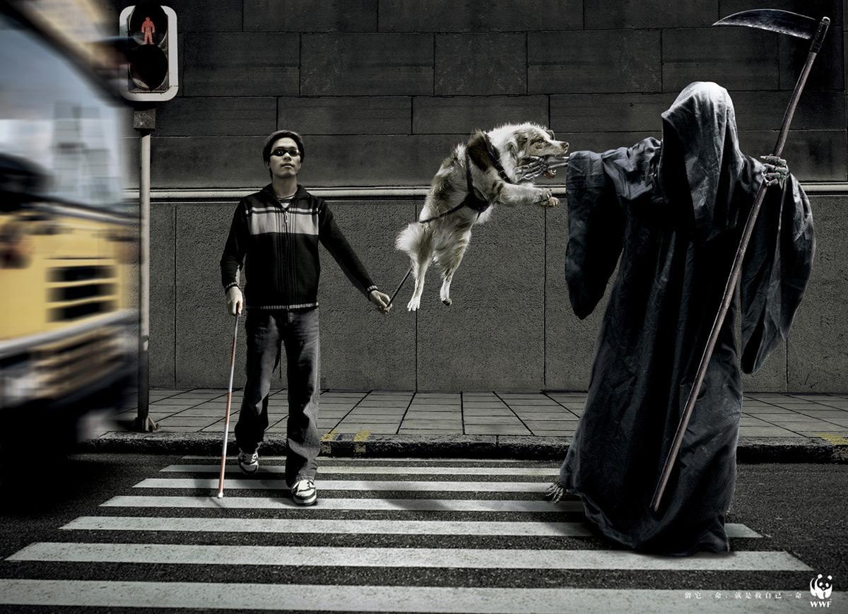 Dog, Street
