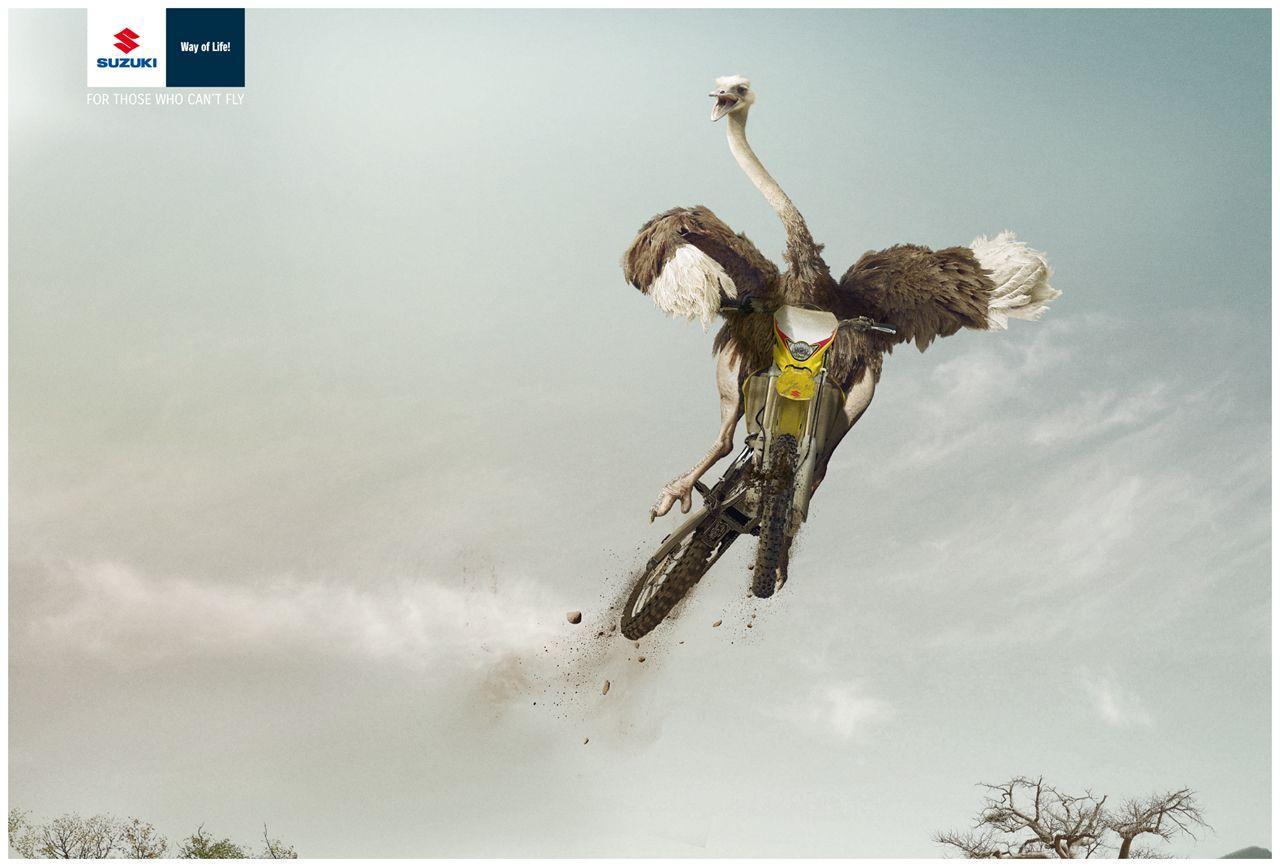 Suzuki Print Ad -  Ostrich
