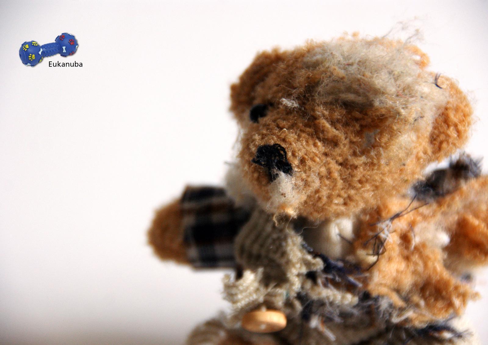 Eukanuba Print Ad -  Teddy Bear