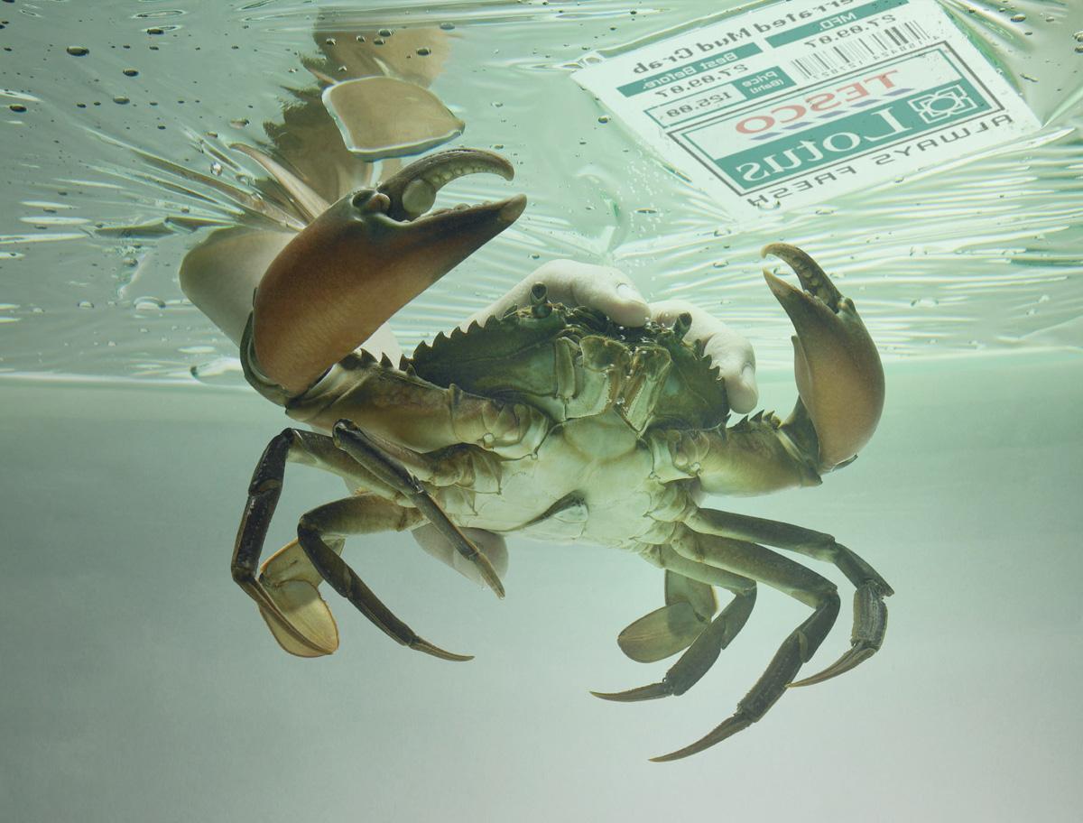 Tesco Print Ad -  Crab