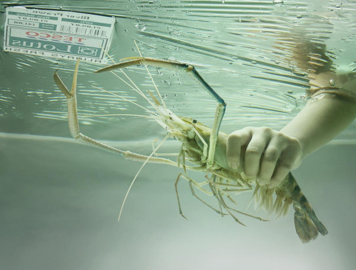 Tesco Print Ad -  Lobster