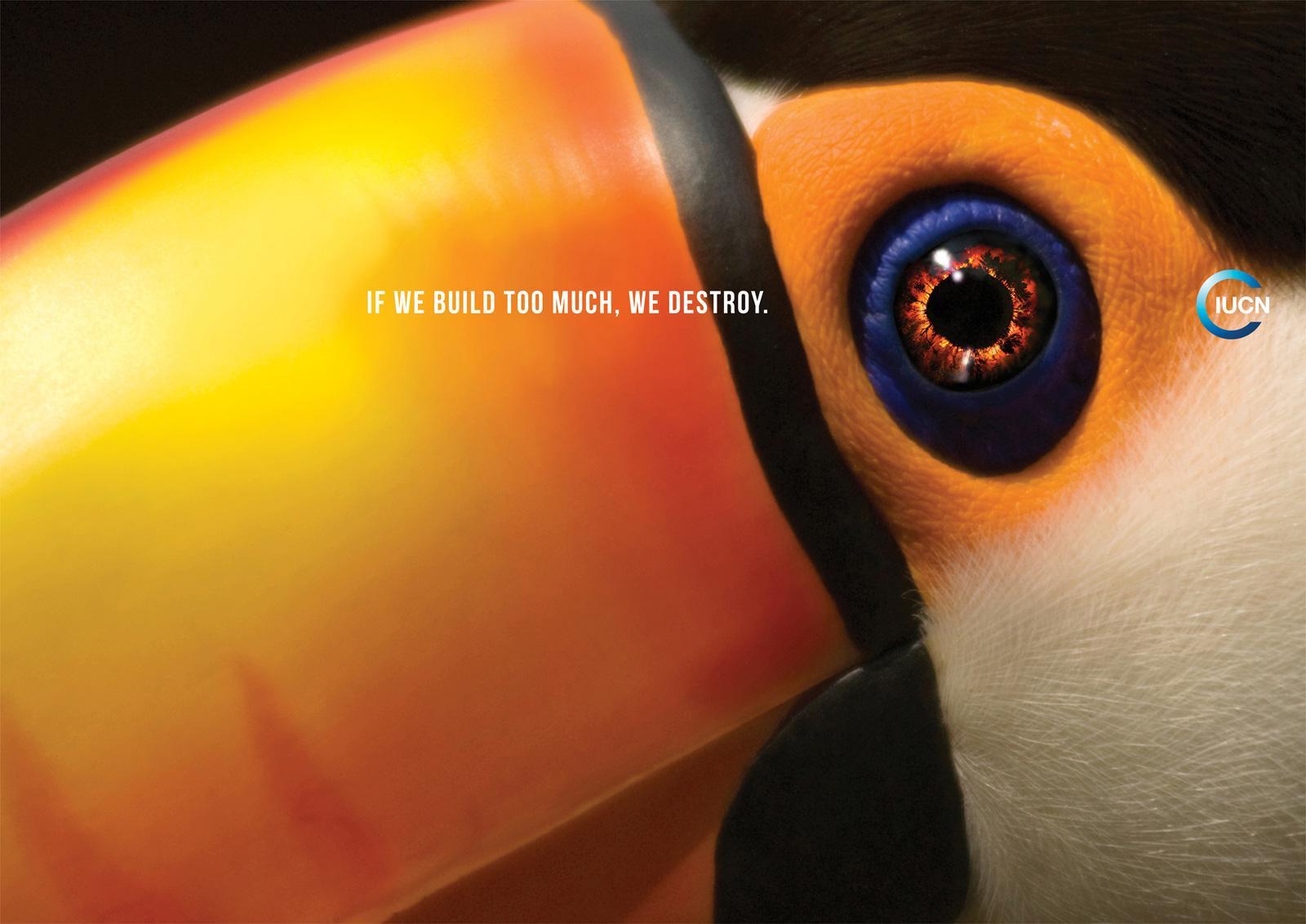 IUCN Print Ad -  Toucan
