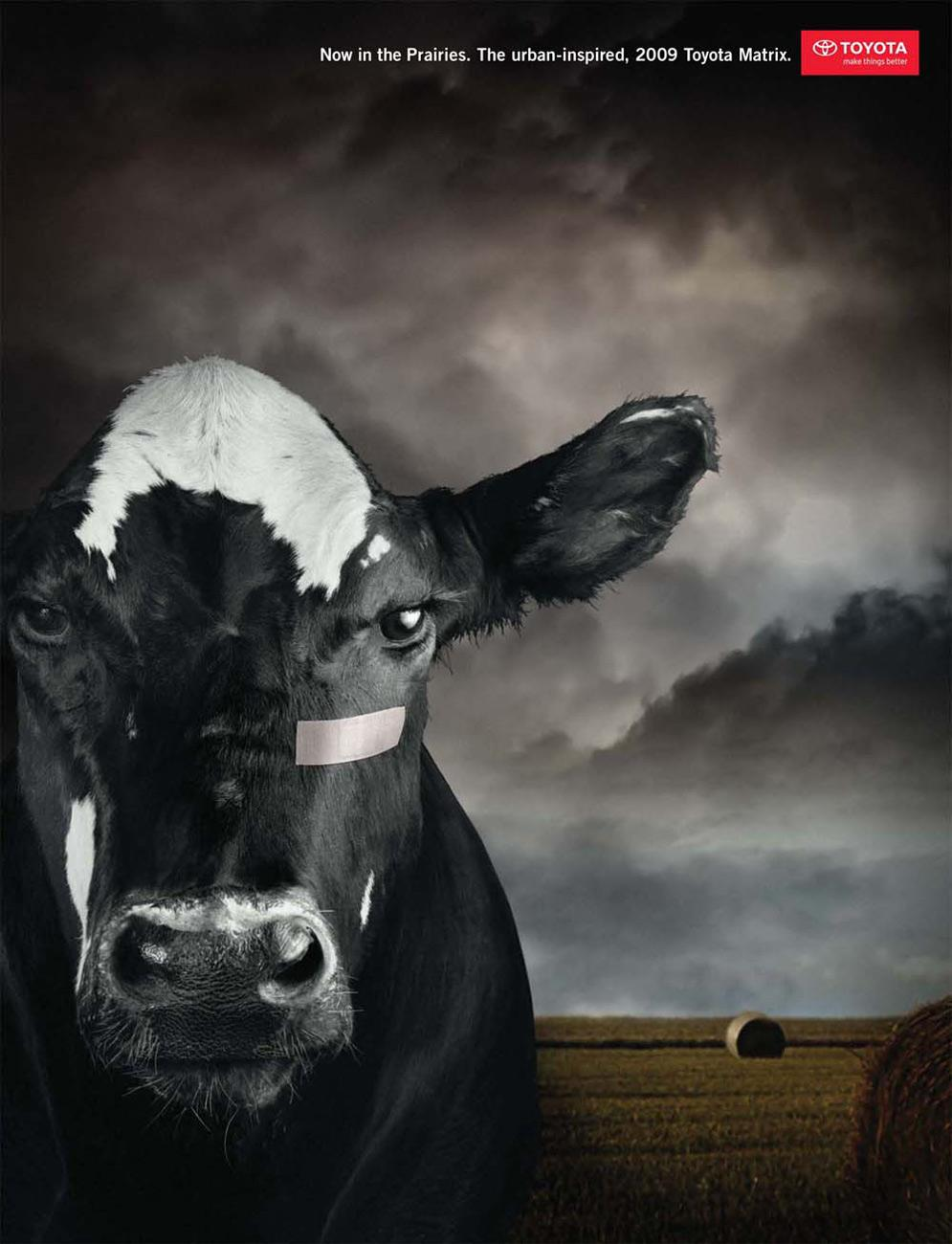 Toyota Print Ad -  Cow
