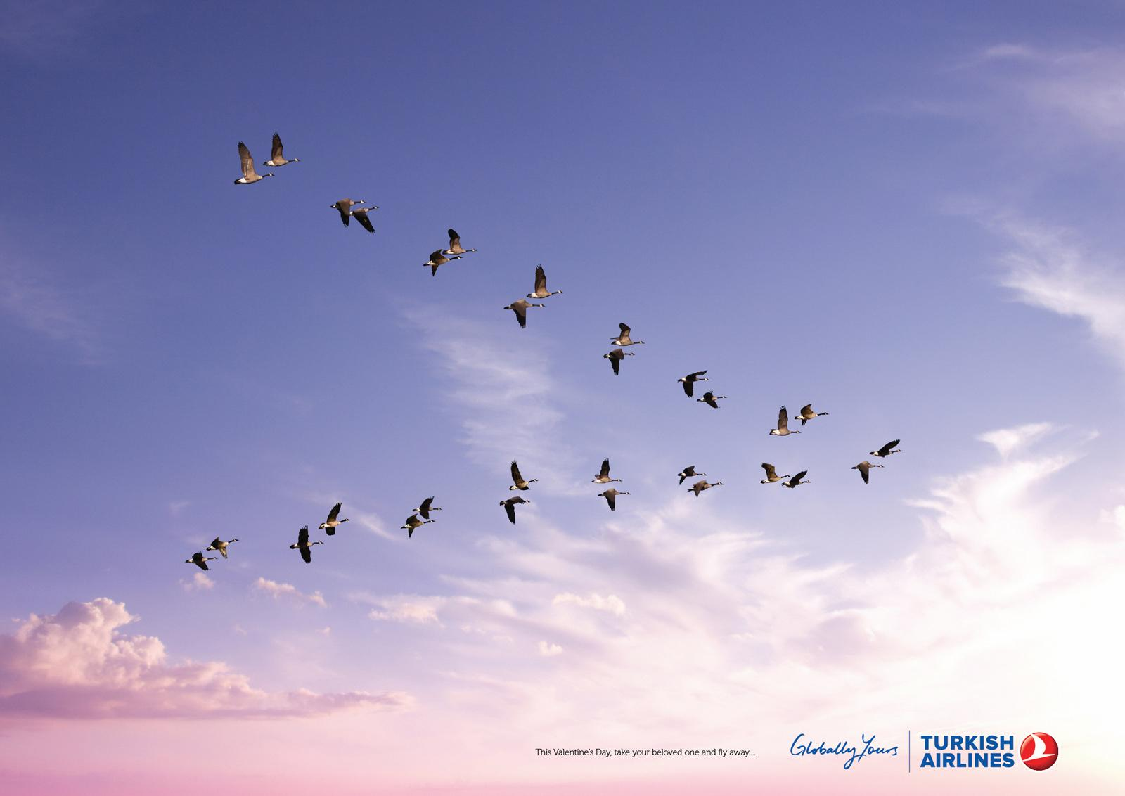 Turkish Airlines Print Ad -  Birds