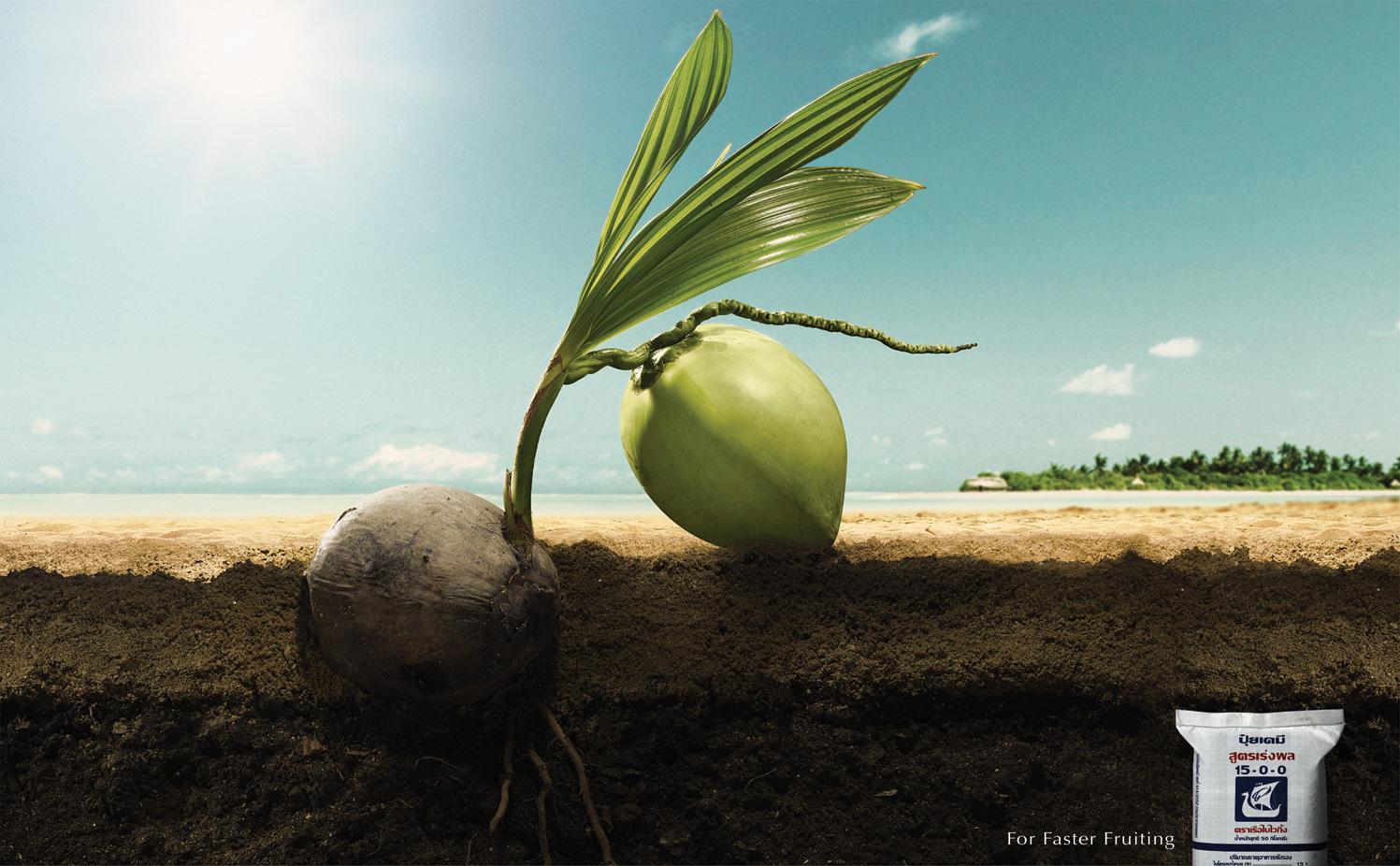 Viking Print Ad -  Coconut