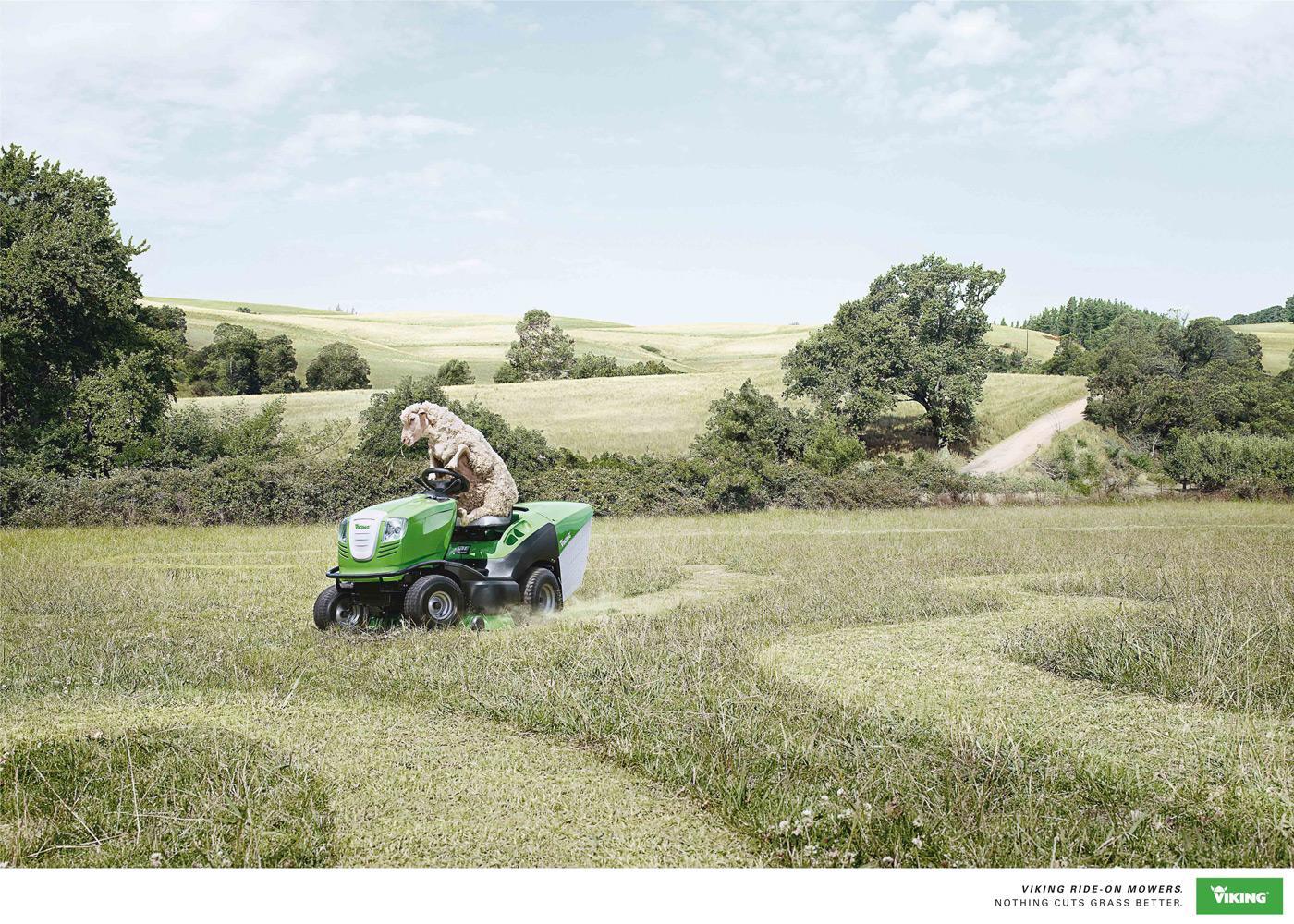 Viking Print Ad -  Sheep