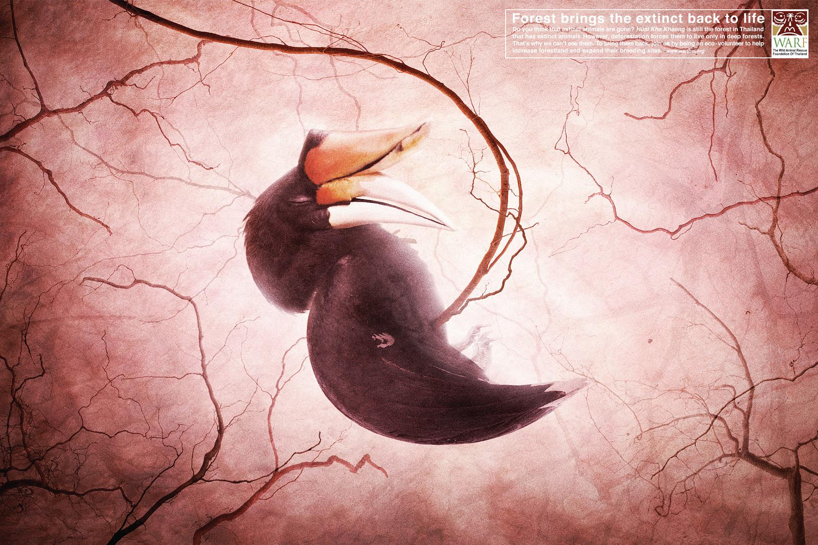 WARF Print Ad -  Bird