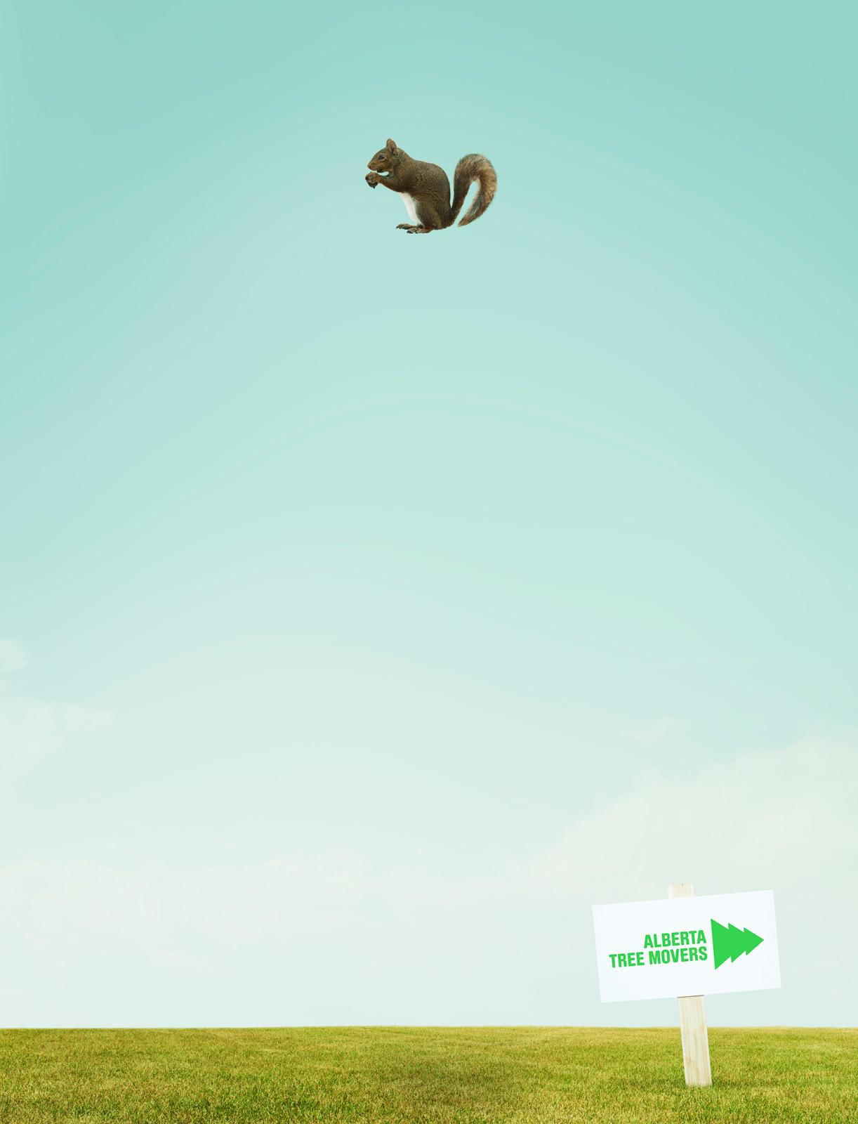 Alberta Tree Movers Print Ad -  Squirrel