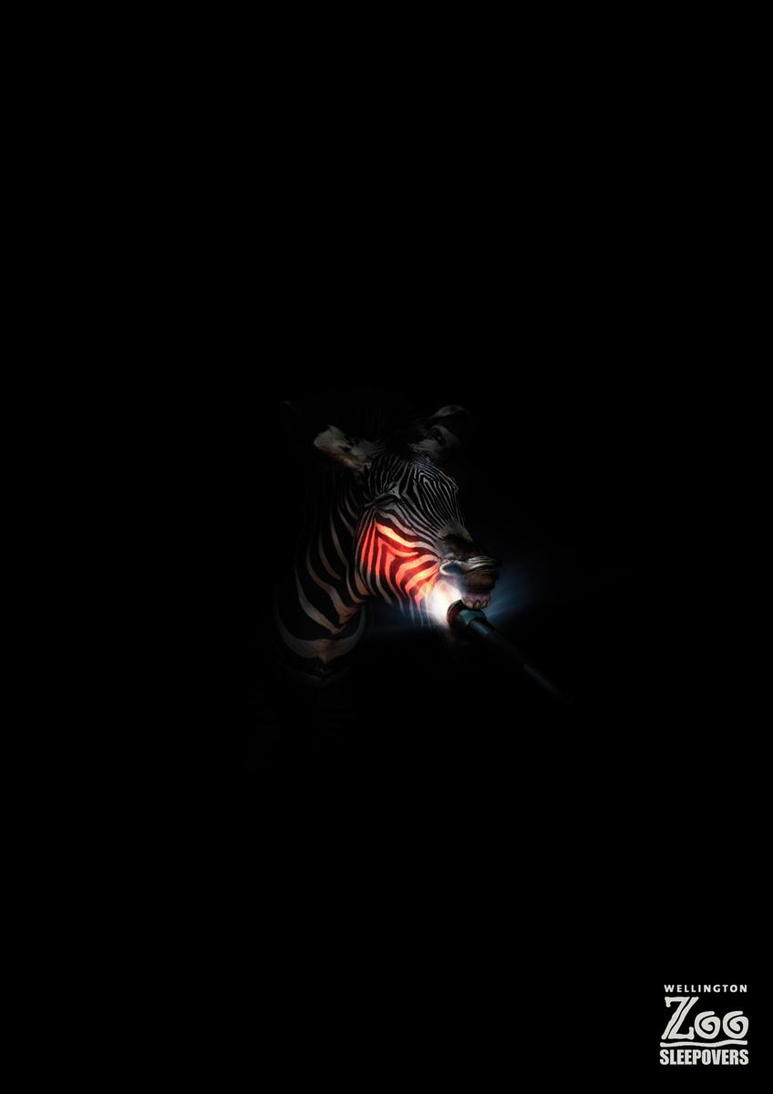 Wellington Zoo Print Ad -  Zebra