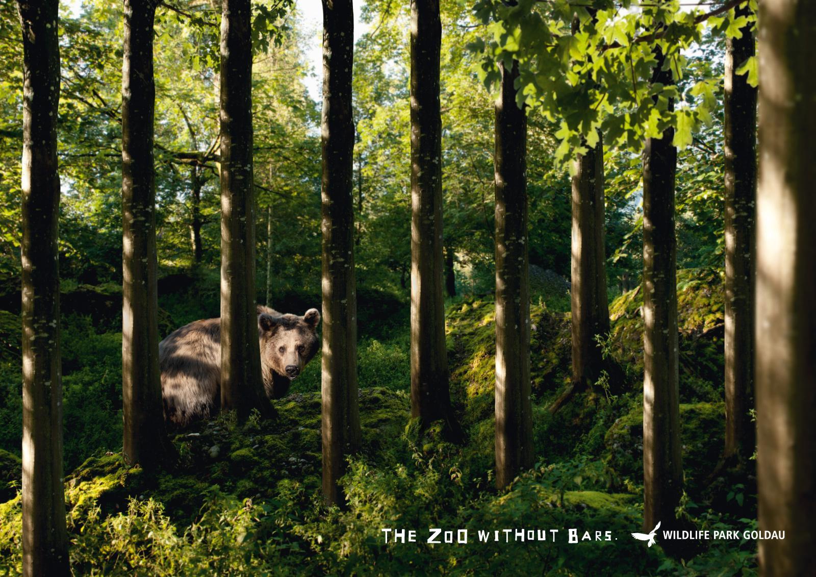 Landscape and Animal Park Goldau Print Ad -  Bear