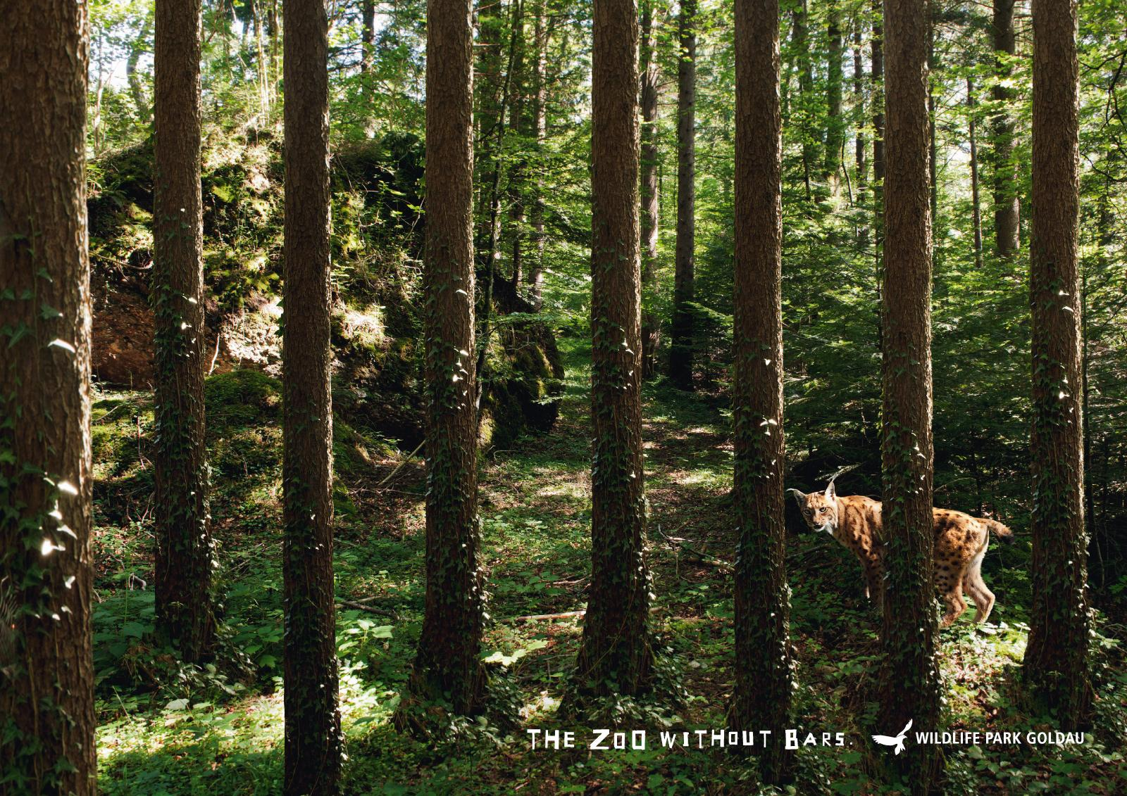 Landscape and Animal Park Goldau Print Ad -  Lynx