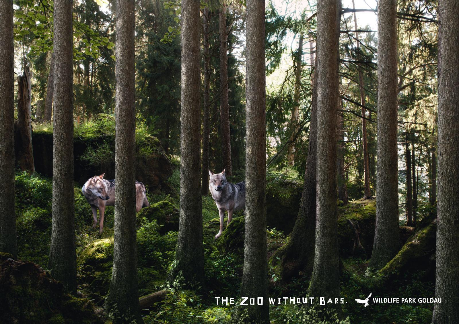 Landscape and Animal Park Goldau Print Ad -  Wolves