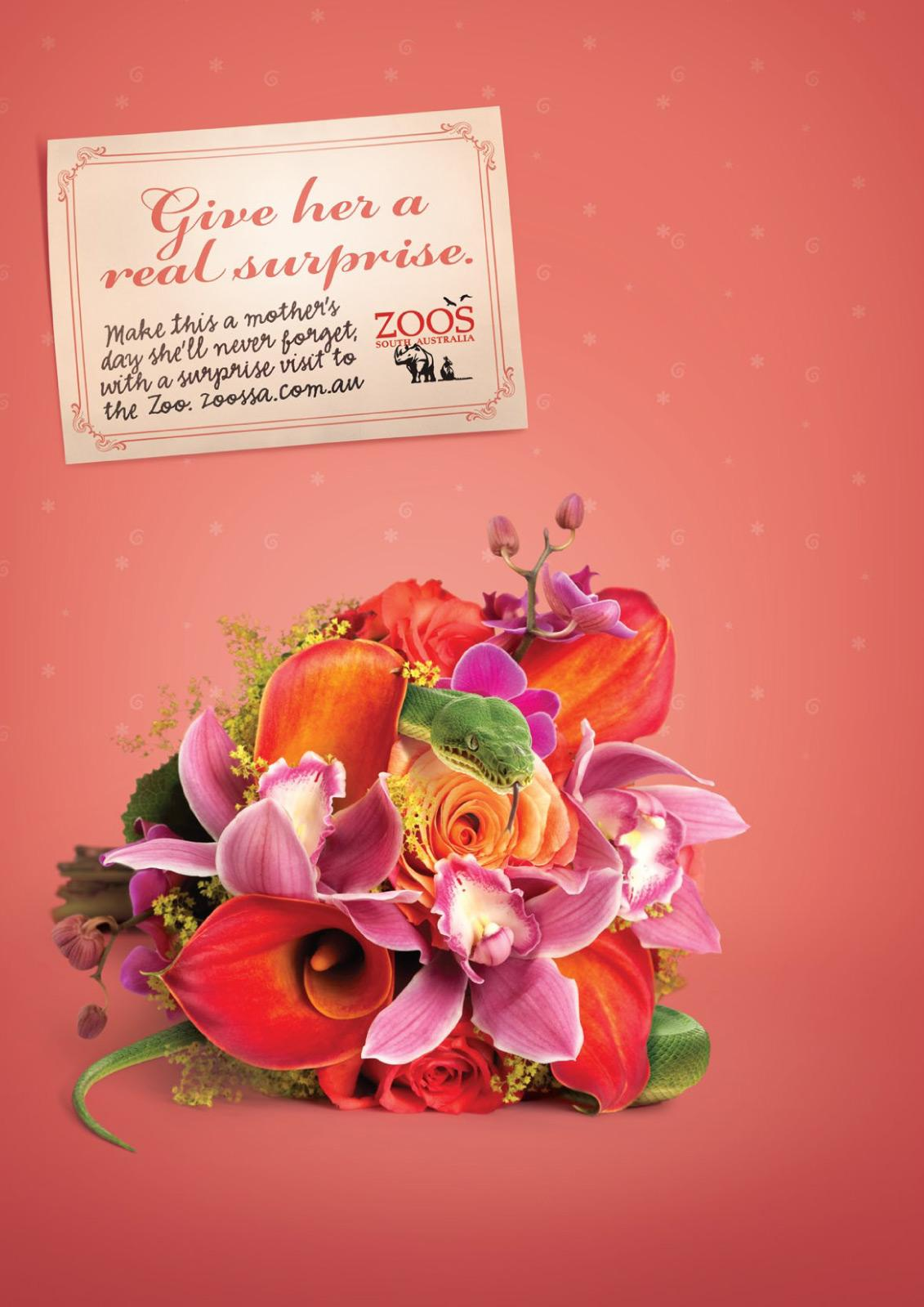 Adelaide Zoo Print Ad -  Mothers Day