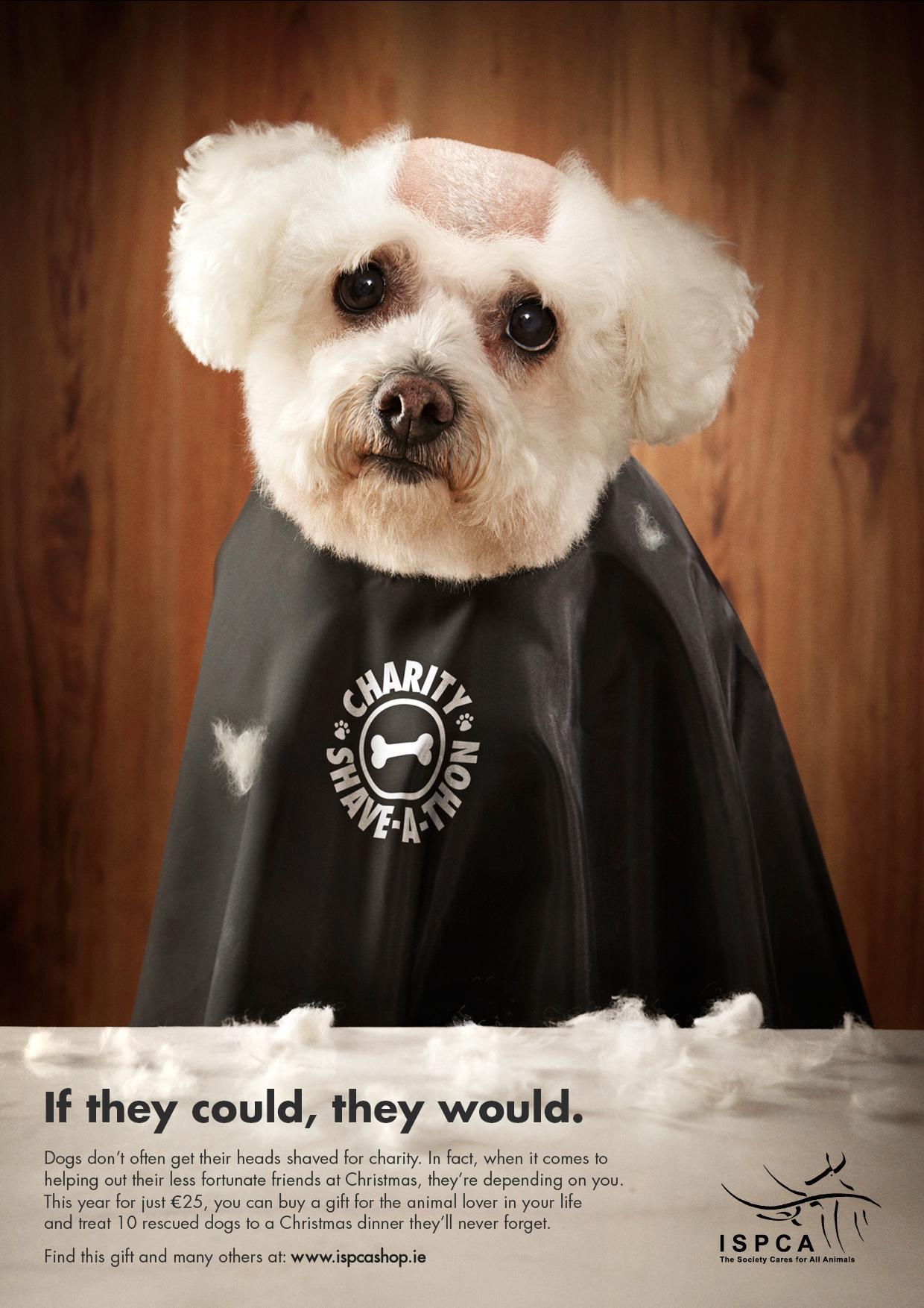 ISPCA Print Ad -  Head shave