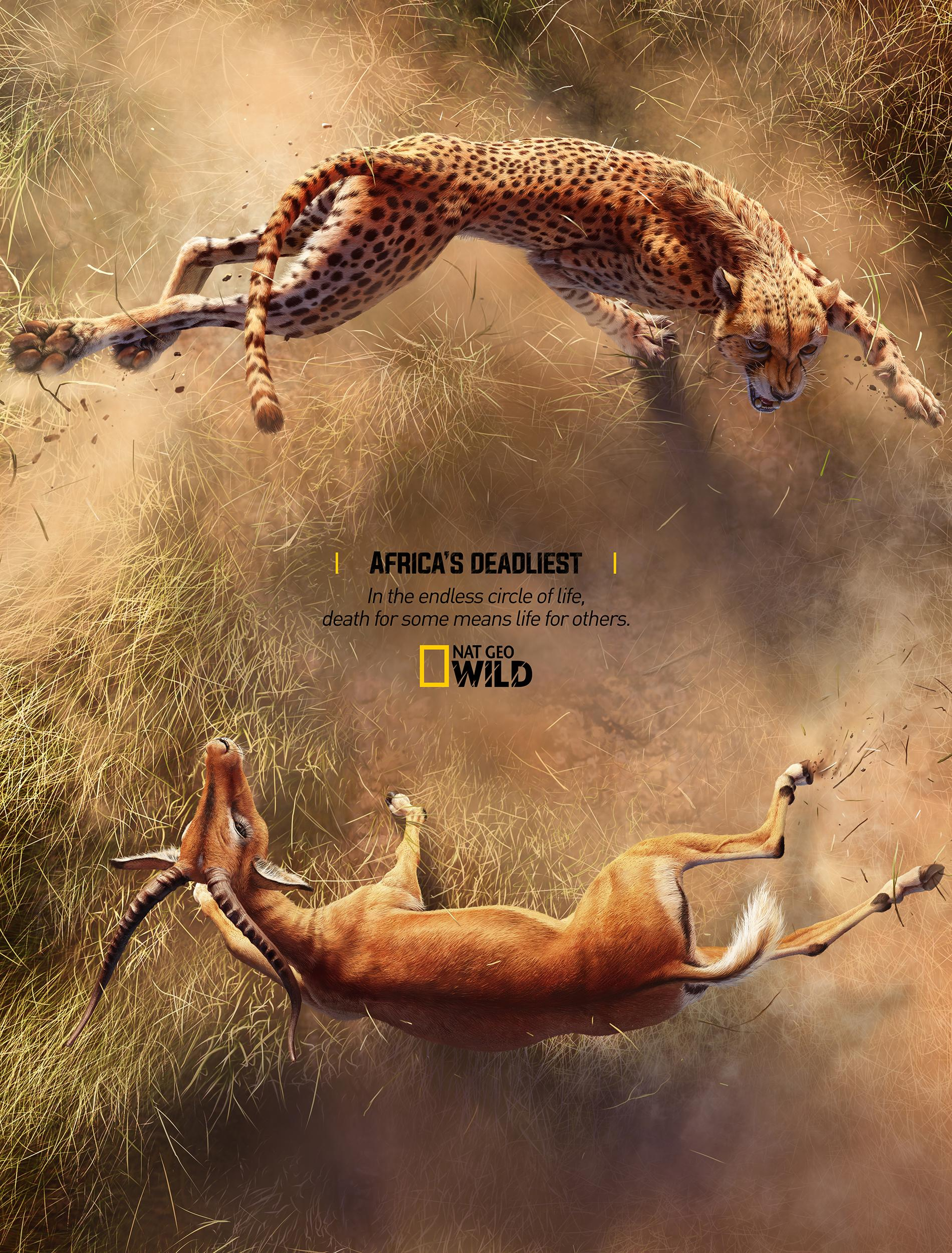 National Geographic Print Ad - Africa's Deadliest - Cheetah X Impala