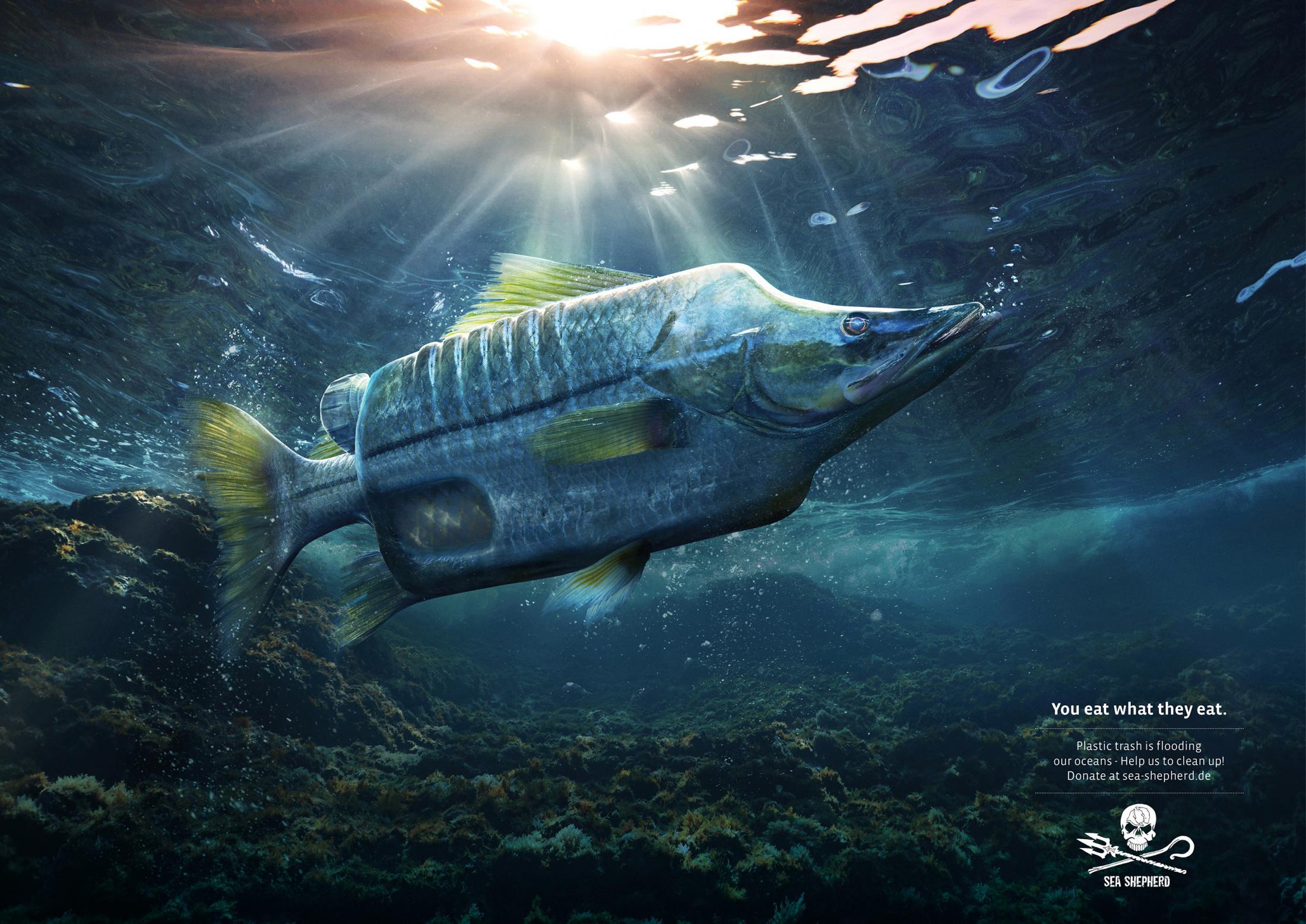 Sea Shepherd Print Ad - Seabass