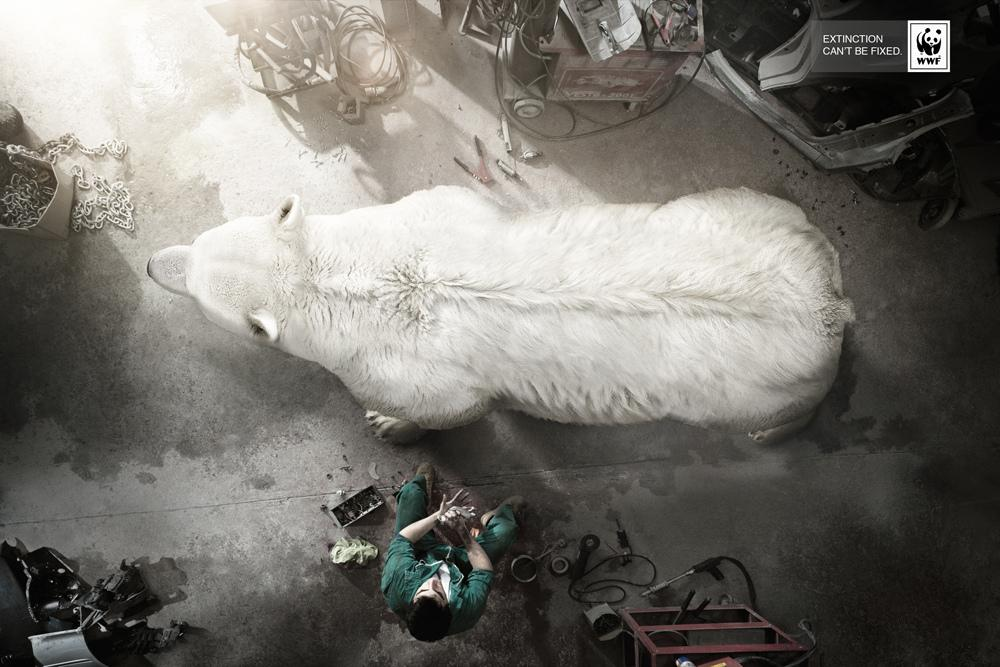 WWF Print Ad -  Extinction can't be fixed, Polar bear